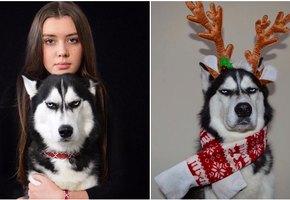 Знакомьтесь: Ануко – пес, который ненавидит Рождество!