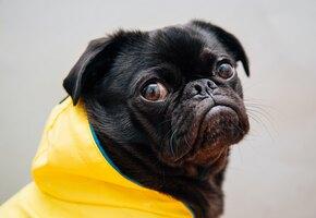 Пёс не любит выходить под дождь: вот, что он придумал, чтобы избежать прогулок