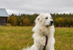 Пес спас семью от стрелка ценой своей жизни