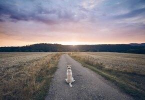 Что делать, если собака грустит и сходит с ума, когда вас нет дома?