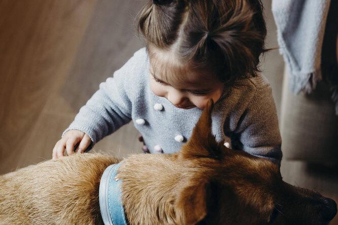 Для чувств нетпреград: собака идевочка смогли подружиться череззакрытую дверь