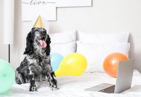Когда собаке есть, что вам сказать: 10 смешных видеозвонков от питомцев