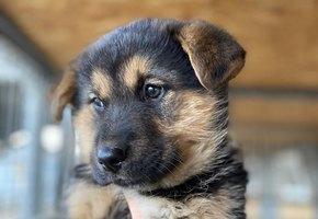 «Это настоящее чудо!» Все беспризорные щенки, которых показала Анна Седокова, нашли потом свою семью