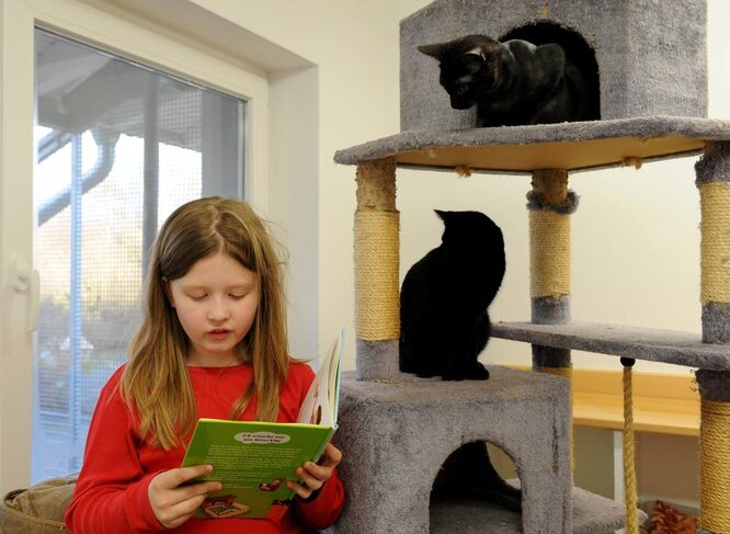 чтение котикам