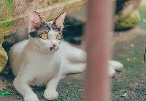 Не может поверить, что свободен: рабочие спасли кота из объятий смерти