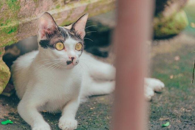 Не может поверить, что свободен: рабочие спасли кота изобъятий смерти