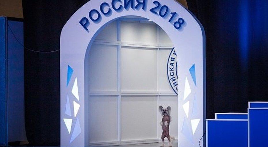 Фестиваль длявладельцев собак -  2-4 ноября вМоскве