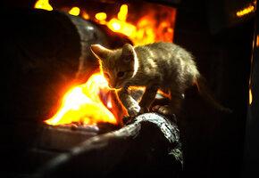 Сердце матери не знает страха: кошка вбежала в горящий амбар, чтобы спасти котят