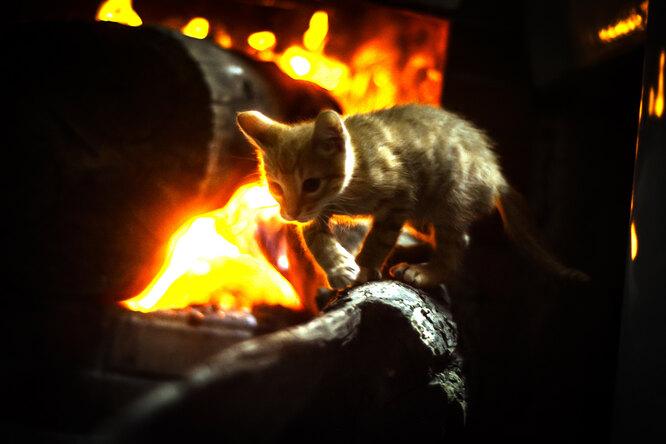 Сердце матери незнает страха: кошка вбежала вгорящий амбар, чтобы спасти котят