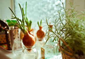 Мастер-класс: домашний огород на подоконнике