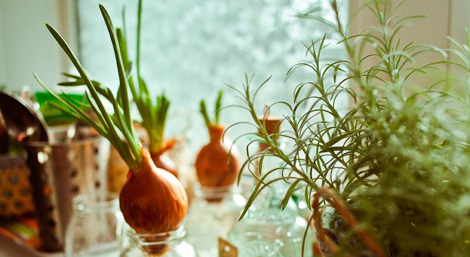 Мастер-класс: домашний огород наподоконнике