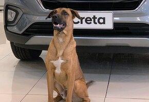 Автосалон приютил бездомную собаку и сделал ее консультантом по продажам