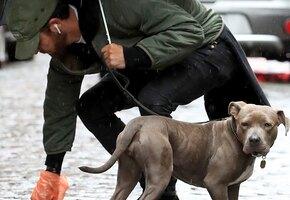 Охранник прославился, отдав свой зонтик собаке во время дождя