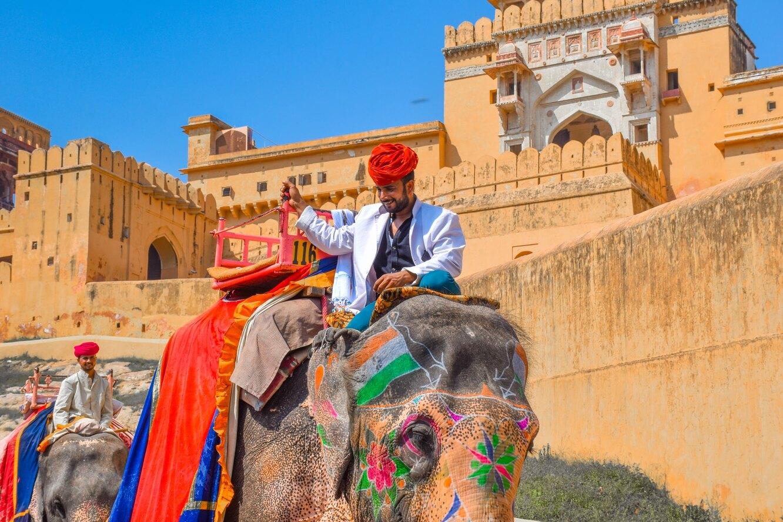 слон, индия, раджастан, погонщик слонов