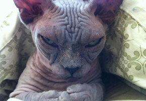 Господи, это очень смешно! Самые сердитые кошки в мире