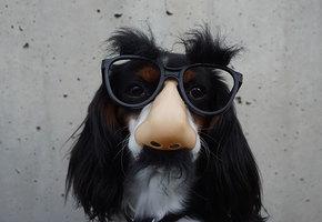 10 «карантинных» видео с собаками, которые заставят рассмеяться каждого