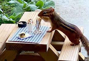 «Похож на маленького человечка»: ресторанный критик создала кафе для бурундука