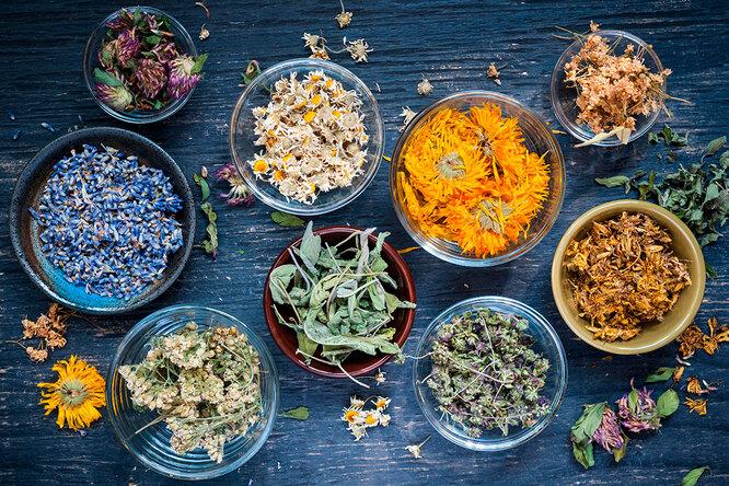 Сила трав: 9 растений, чья польза доказана наукой