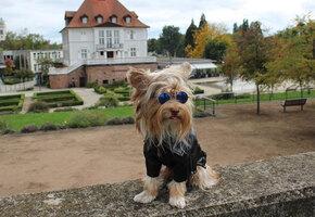 Самый модный: у этой собаки нарядов больше, чем у вас