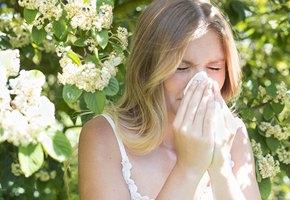 8 домашних растений, вызывающих аллергию — даже если у вас ее никогда не было