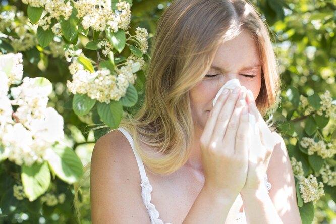 8 домашних растений, вызывающих аллергию — даже если увас ее никогда небыло