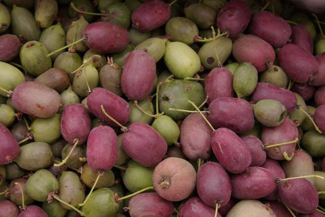 Какие плодовые деревья, кроме яблонь ислив, можно посадить всаду весной?