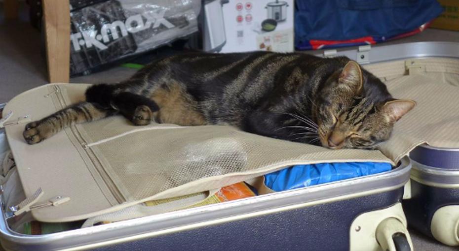 После смерти кота хозяева узнали, как он изменил жизнь незнакомого человека