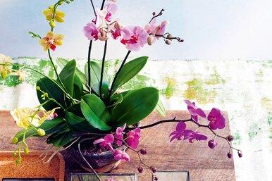 Орхидеи. Дыхание природы ввашем доме