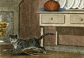 Как дрессировать кота? Советы бывалых