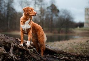Собака умоляла людей спасти ее заживо погребенных щенят. И помощь пришла (видео)