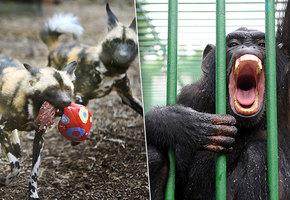 Дикие и опасные: ужасные случаи нападения животных на людей в зоопарках