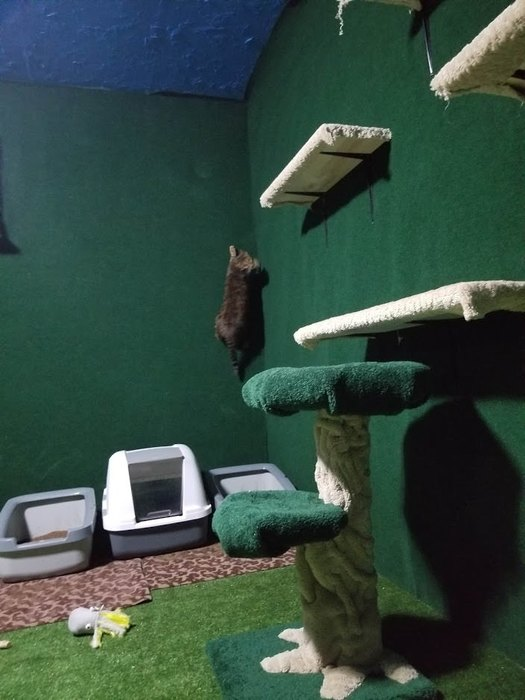 Когда коты обнаружили, что постенам также можно лазать, счастью небыло предела