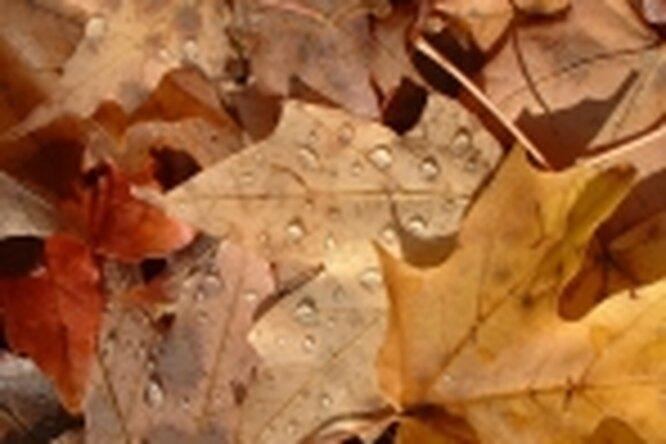 Гороскоп насентябрь