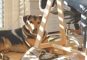Женщина месяцами приводила своего пса в чужой офис: думала, что это собачьи ясли