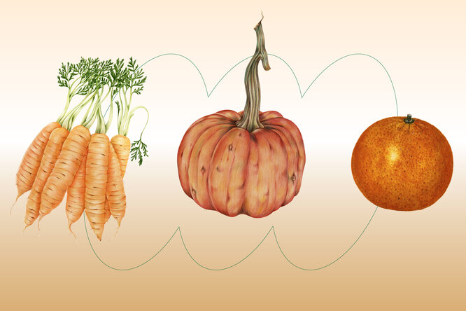 Как питаться осенью, чтобы ненабрать вес?