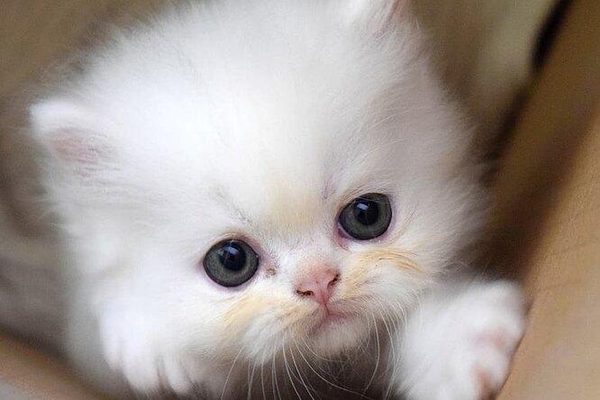 54-летняя женщина-инвалид может оказаться без крова из-за кошки, спасшей ей жизнь