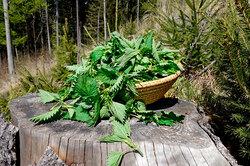 Сныть, крапива, одуванчик: 5 полезных применений дляогородных сорняков