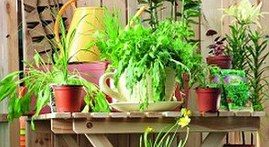 Огород дома дляначинающих