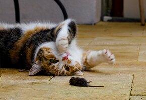 Колокольчик не поможет: исследователи назвали способы отучить кошек охотиться