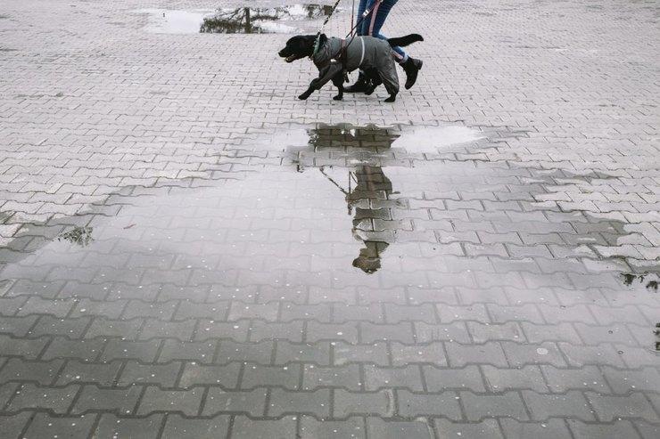 Юстас ведет Антонину сухой дорогой, между лужами. Он сам должен выбрать, как обойти препятствие Фото: Наталья Булкина дляТД