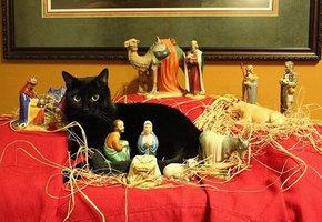 20 случаев, когда коты бессовестно влезли в сцену рождения Иисуса