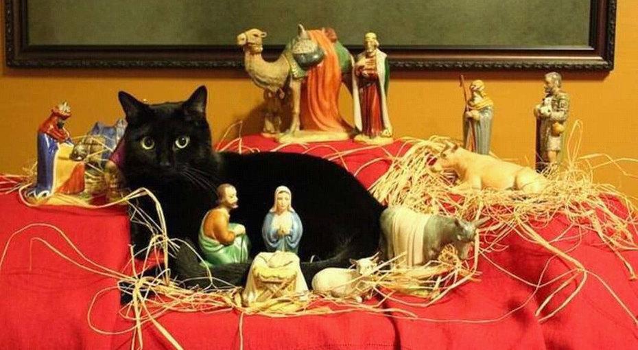 20 случаев, когда коты бессовестно влезли всцену рождения Иисуса