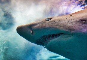 Акула пожалела о визите на российский пляж: туристы превратили это в шоу