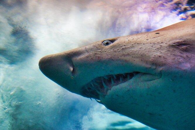 Акула пожалела овизите нароссийский пляж: туристы превратили это вшоу