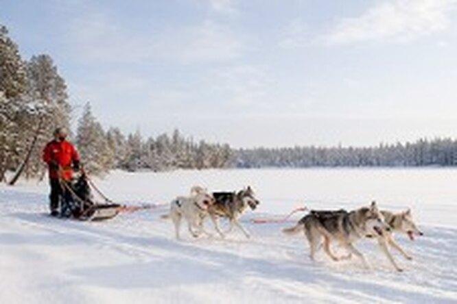 Пять зимних приключений вФинляндии