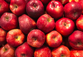 Белый налив, мельба и ещё 7 сортов яблонь для Средней полосы и Подмосковья