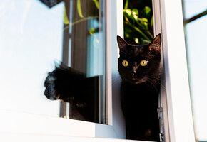 Мужчина год строил «дом мечты» для своих котов. Вот как он выглядит