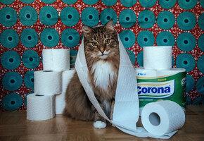 Кот научился использовать унитаз, но хозяева не рады