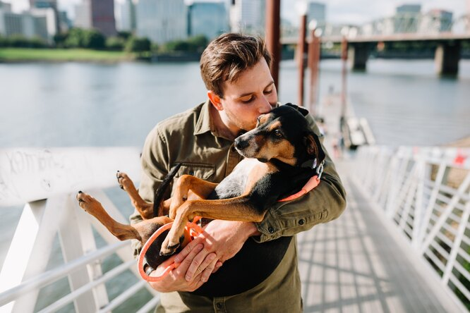 собака, любовь, мужчина