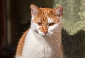 Если мама отказалась: деревенская кошка выкармливает редких амурских котят